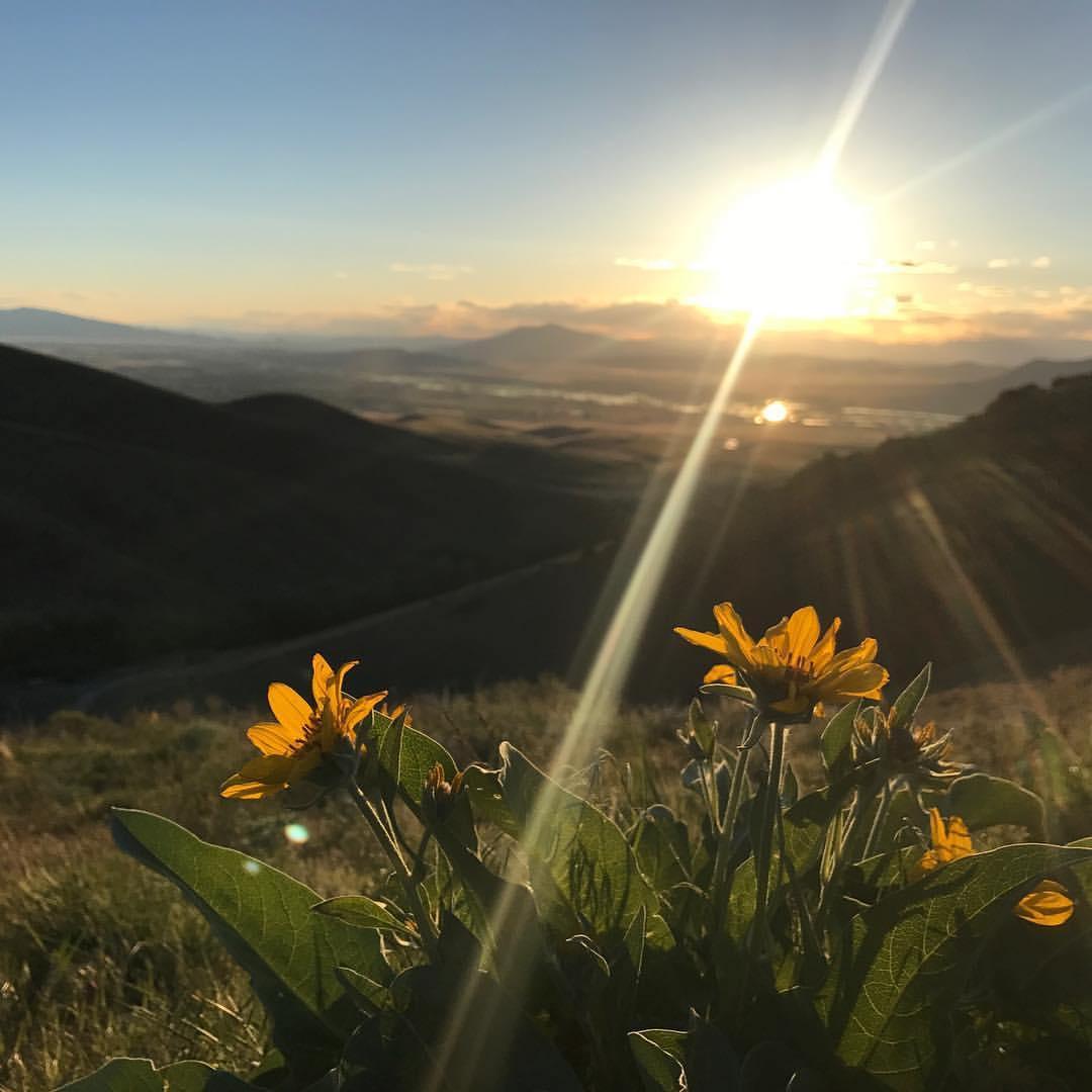 Flores en una colina