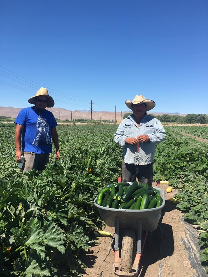 Trabajadores agrícolas en el campo
